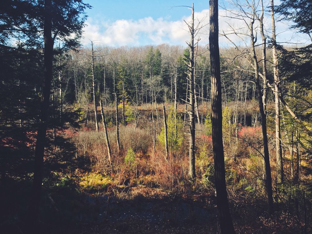 Mud Pond Preserve