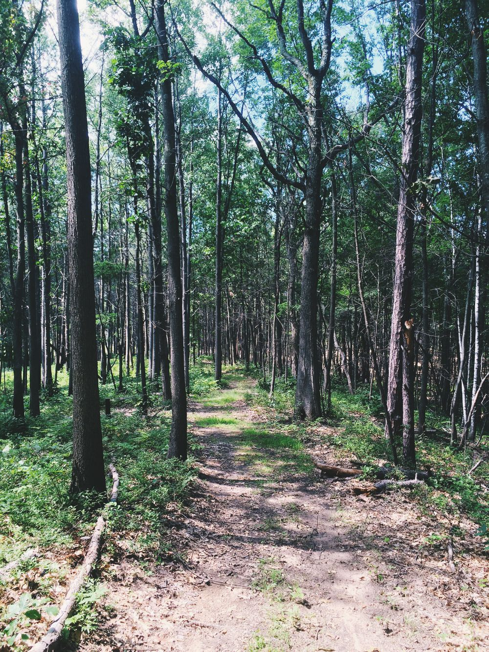 Albany Pine Bush trail #9